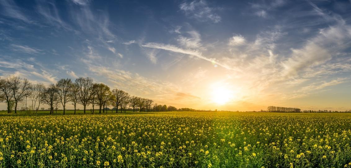 Primavera-marzo